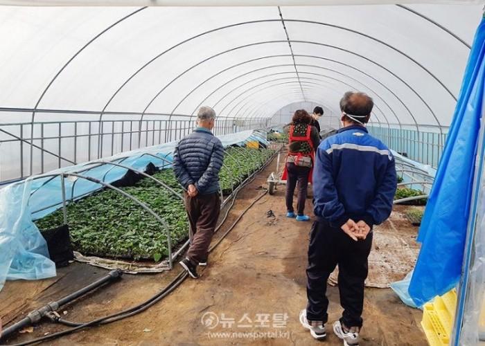 (서산)0325 고구마 농사는 육묘농사가 절반, 지금부터 시작.jpg