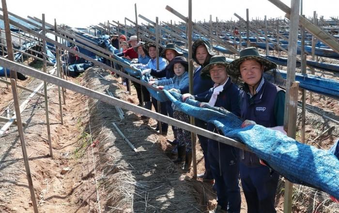 태안군의회,태풍 피해복구 봉사활동 '구슬땀'