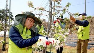태안군 공무원 '농촌 일손돕기'봉사 구슬땀