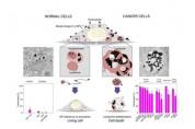 암세포만 골라 죽이는 금속 나노입자 개발