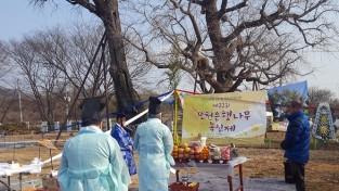 '수령 1100년' 당진 면천은행나무 목신제 열려