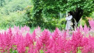 천리포수목원에 '노루오줌' 꽃 활짝