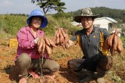 태안군,'원예산업종합계획' 최상위 A등급