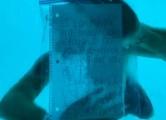 美 남성, 바다 속에서 청혼 도중 익사