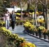 가을향기 그윽한 '옥파 국화축제' 내달1일 개막