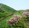 단양 소백산, 아름다운 철쭉 장관