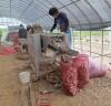 서산시,고품질 마늘 생산 관리시스템 구축
